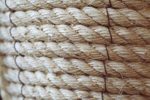 Industrial hemp has a number of uses, one of which is rope.