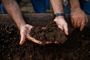 organic soil for growing cannabis
