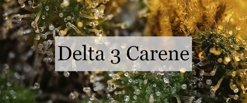 Delta 3 Carene