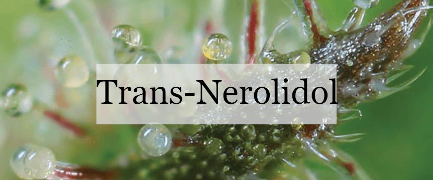 Trans-Nerolidol